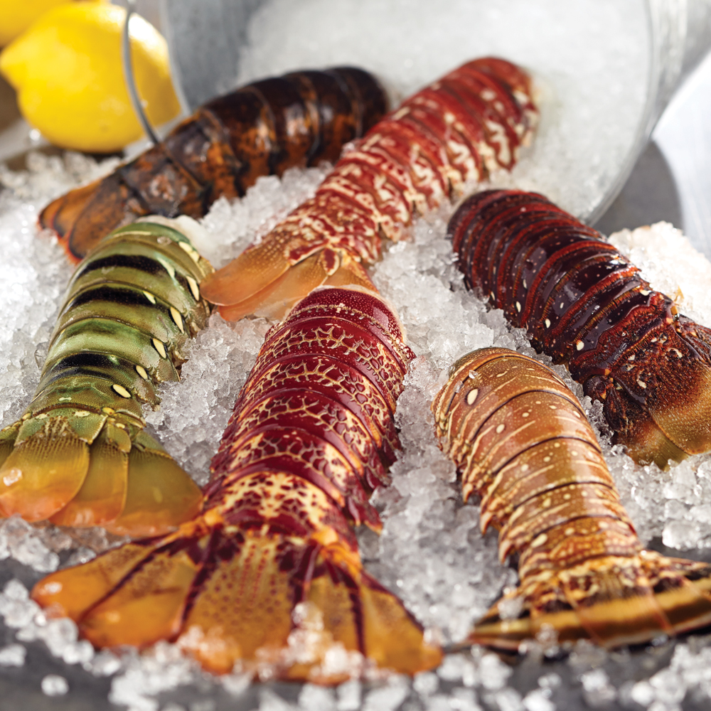 Exotic Lobster Tails & Turf